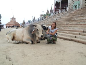 Püha härjaga